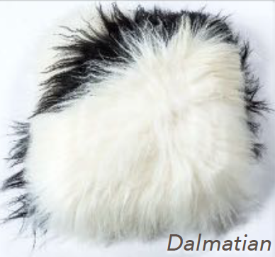 Icelandic Long Hair Cushion - Dalmation